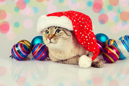 christmas pussy: Cat wearing Santas hat with Christmas decoration