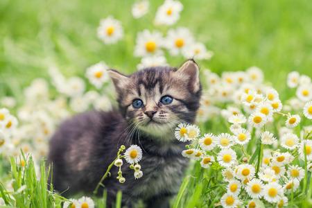 Cute kitten relaxing in flowers Imagens