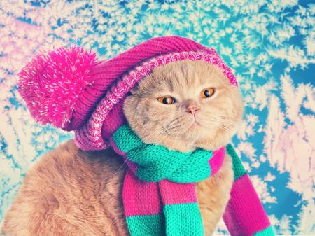 pompom: Gatto che porta un cappello a maglia rosa con ponpon e una sciarpa contro gelida finestra