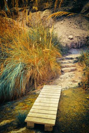 gedi: Park in Ein Gedi Reserve, Israel, film filter Stock Photo