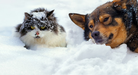 puppy and kitten: Cat and dog lying on the snow in cold winter