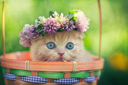 animal eye: Cute little kitten wearing chaplet in a basket Stock Photo