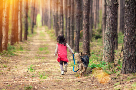 animals together: Little girl walking with big dog in the pine forest