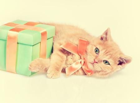 christmas pussy: Cute kitten wearing bow ribbon lying near present box