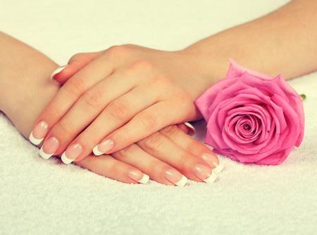 manicura: Manos femeninas con la manicura francés perfecto y rosa Foto de archivo
