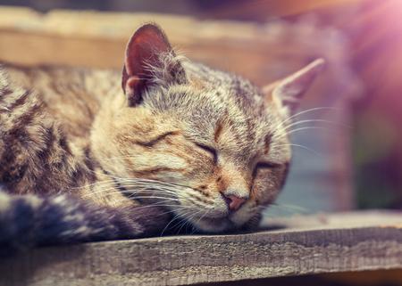 big ear: Cat sleeping outdoors