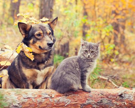 秋の森で一緒に屋外に座って犬と猫親友します。
