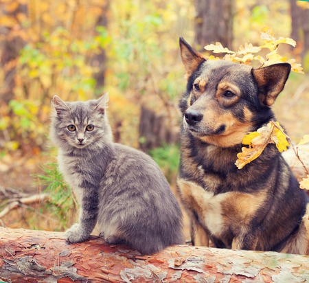 puppy love: Mejores amigos del perro y del gato que se sienta junto al aire libre en el bosque de oto�o