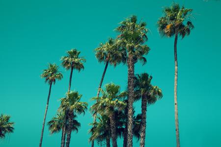 naranja arbol: Palmeras contra el cielo azul