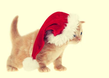 kitten: Little kitten wearing santa hat