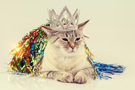 クリスマスの装飾を持つ猫 写真素材