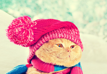sombrero: Portrait of cat wearing knitting hat with pompom and scarf in snowy winter