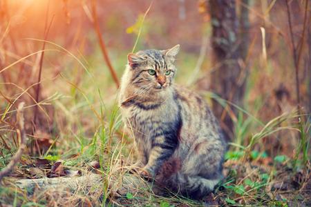 cute bi: Cat walking in the forest