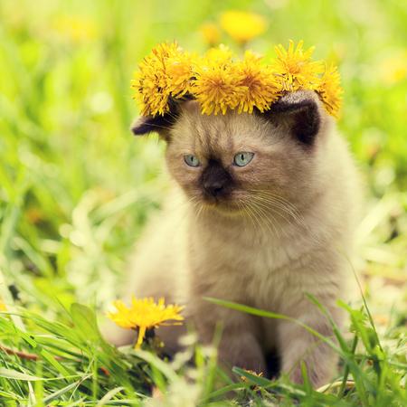 chaplet: little kitten crowned chaplet from the dandelion flowers
