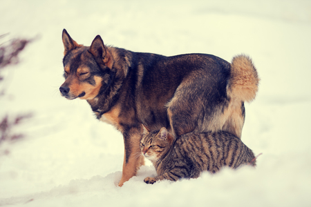 winter weather: Cat and dog best friends outdoors in the snow