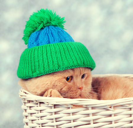 resfriado: Cat wearing a knitted cap lies in a basket