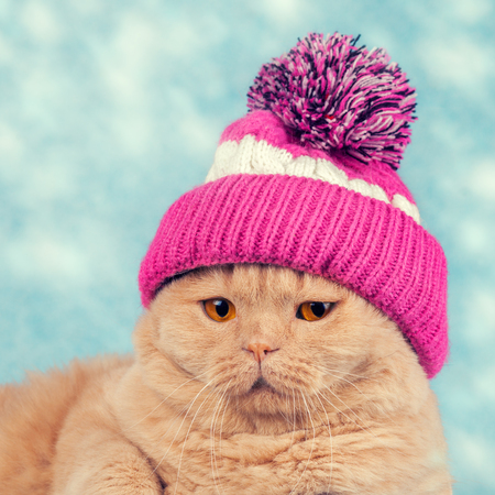 sombrero: Portrait of cat wearing a knitted cap with pompom Foto de archivo