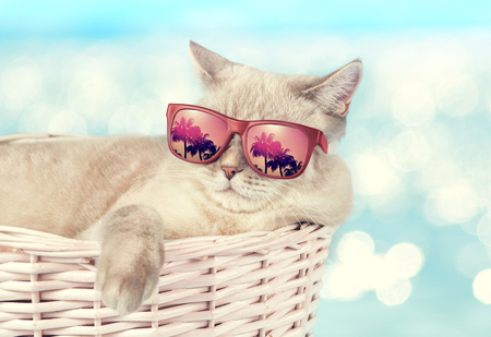 The cat in sunglasses lying in a basket on the background of the sea