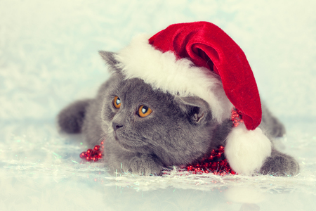 christmas pussy: Little kitten wearing santa hat on Christmas background