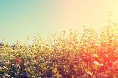 Gryka pola w świetle słońca