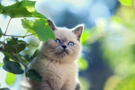 cute bi: Portrait of little kitten walking in the garden Stock Photo