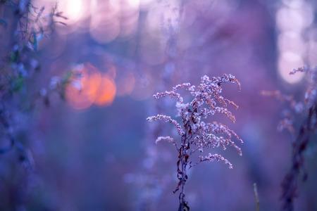 purple sunset: Autumn landscape at purple sunset for background.