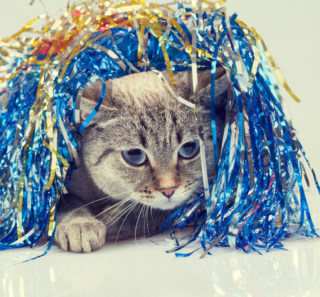 christmas pussy: Cat with Christmas decoration