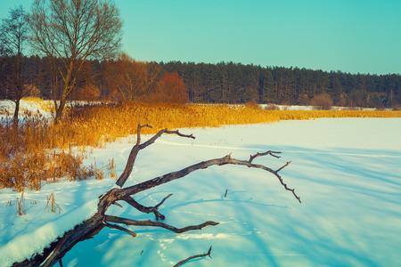 snowy field: Snowy field with fallen dry tree