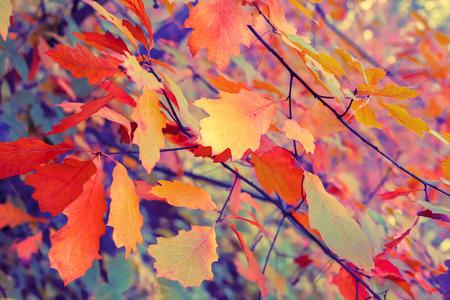 blue floral: Vintage autumn colorful leaves background