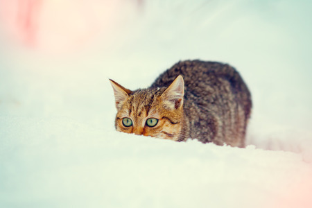 christmas pussy: Hunter cat sneaking in the snow