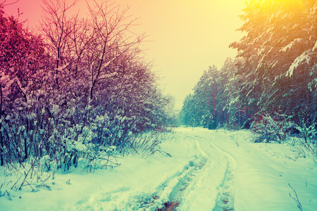 snowy landscape: Rural snowy landscape Stock Photo