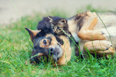 dog cat: Little kitten lying on dogs head