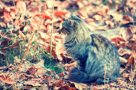 autumn cat: cat sitting on the fallen leaves in autumn