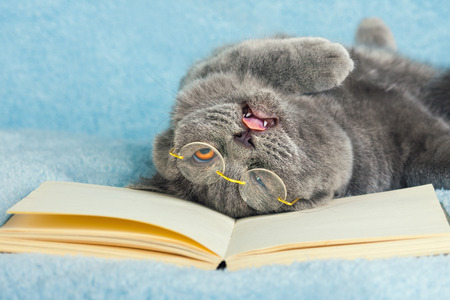Cat wearing glasses with sticking out tongue lying on the back on book