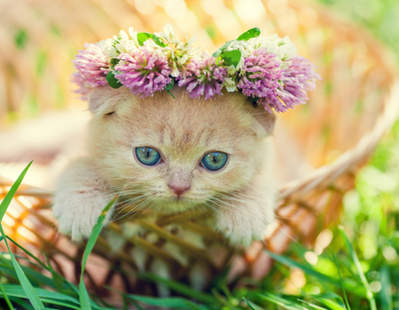 chaplet: Portrait of cute little kitten crowned with a chaplet of clover Stock Photo