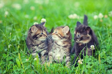 cute bi: Three little kittens sitting on the grass Stock Photo