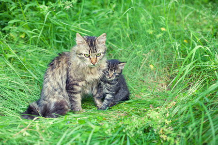 baby love: Mom cat with little kitten on the grass