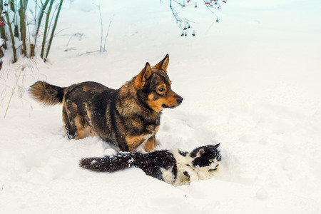 christmas pussy: Big dog and black and white cat playing in snow Stock Photo