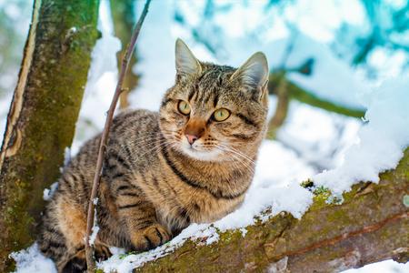 sneak: Portrait of cat on the snowy tree in winter