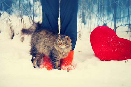 girl in the forest: Cat rubbing against female legs in the snow