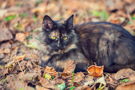 black carpet: cat sitting on the fallen leaves in autumn