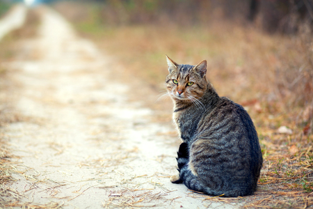 dream: Cat sitting on the dirt rural road