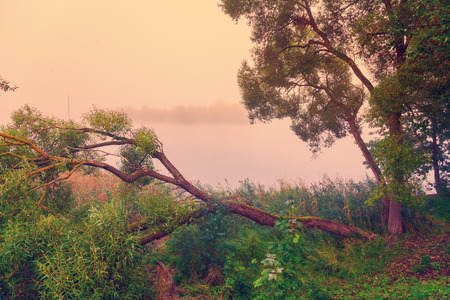 青空: 霧の朝。農村の風景です。川の土手にあるツリー