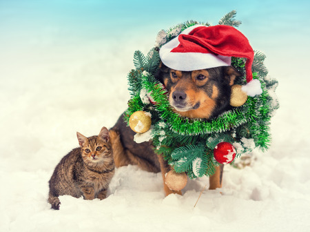 kitties: Dog wearing christmas wreath and santa hat sitting with kitten outdoors in snow
