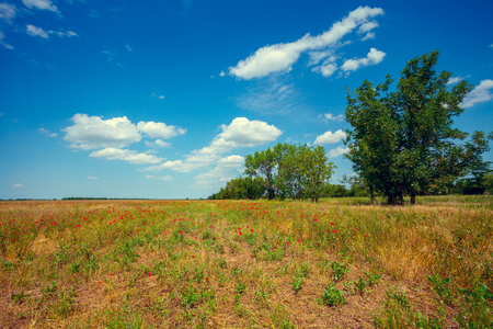 uncultivated: Uncultivated field with trees on background