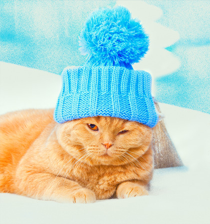 christmas pussy: Portrait of cat wearing a cap with pompom