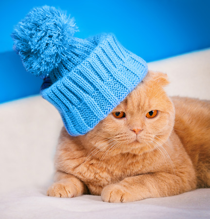 pompom: Portrait of cat wearing a cap with pompom