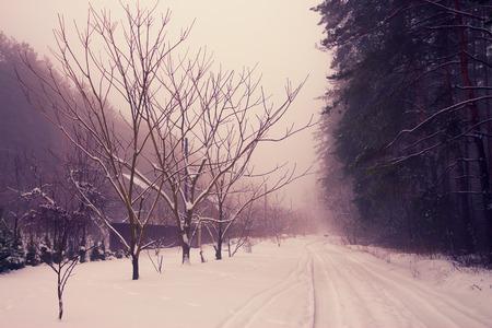 snowy landscape: Rural winter snowy landscape
