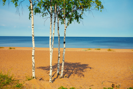 weather front: Baltic sea wild beach in calm weather with birch trees in front