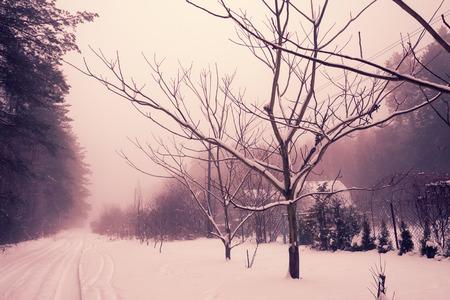 invierno rural paisaje nevado Foto de archivo